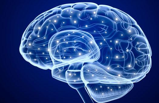 humain-brain-mark-erwin